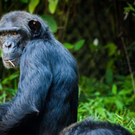 Find the strength to follow self-help advice – moving against your inner monkey