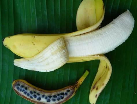 Paleo pseudoscience and food cults